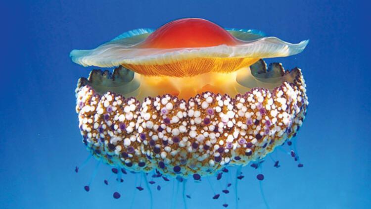 Denizlerimizi saran tehdit: Biyoistila 62
