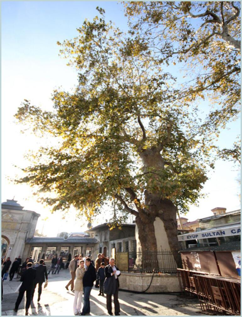Türkiyenin en iyi 10 anıt ağacı
