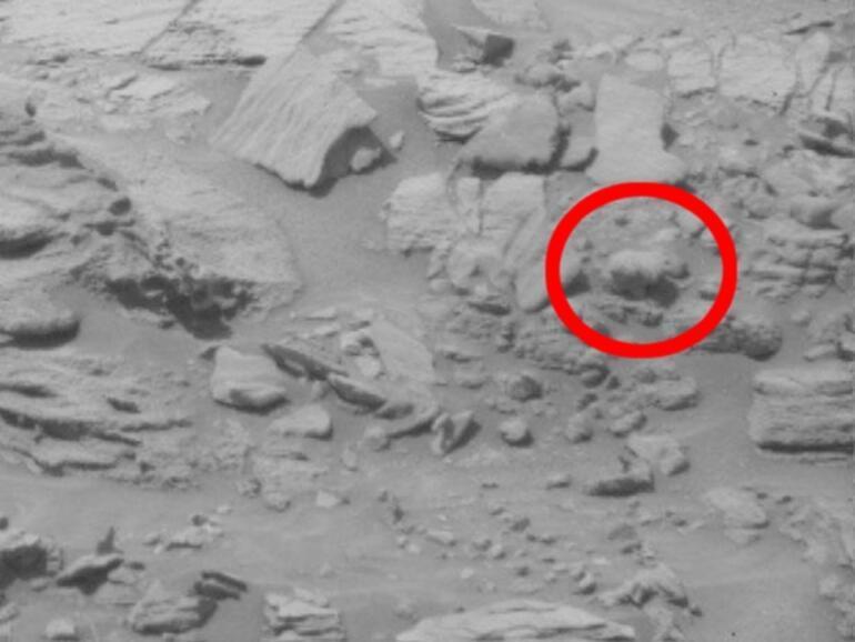 Mars'ta balık fosili mi bulundu?