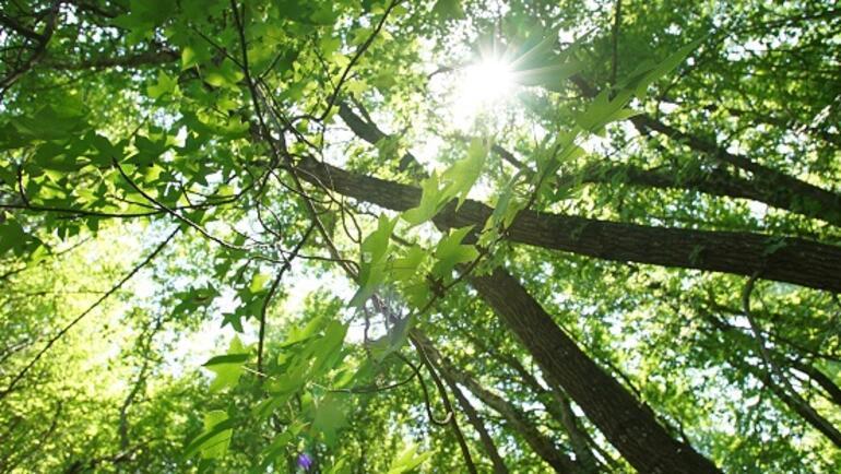 Huzurun adresi: Köyceğiz ve Sığla ormanları