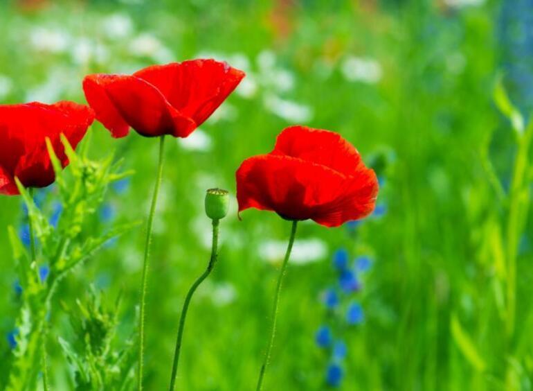Türkiyenin Baharda çiçek Açan En Iyi Yerleri Seyahat Haberleri