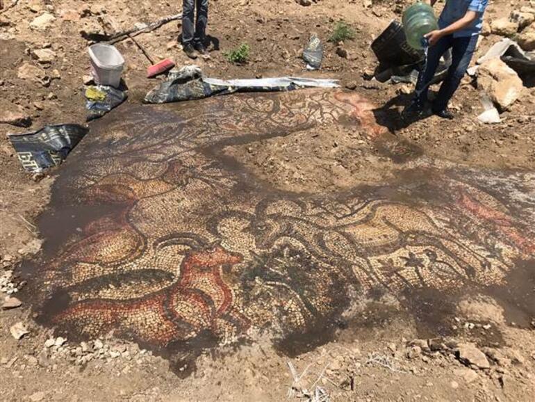 Tarlada çalışırken 1600 yıllık mozaik buldular