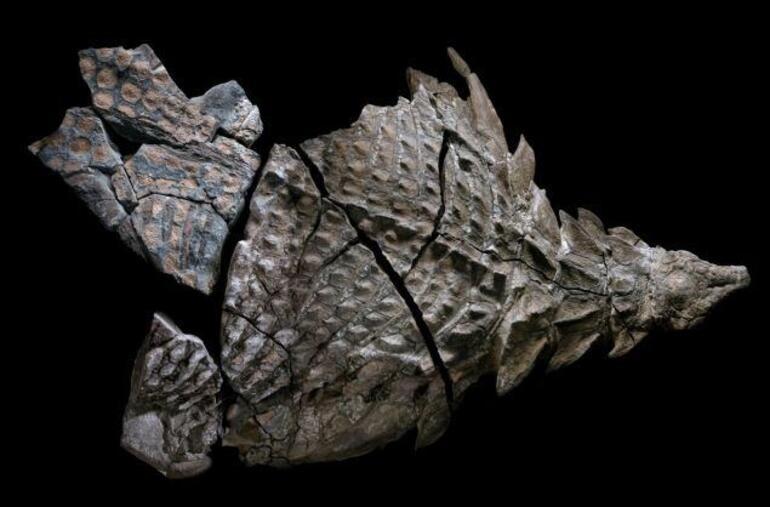 O ülkede 110 milyon yıllık dinazor bulundu