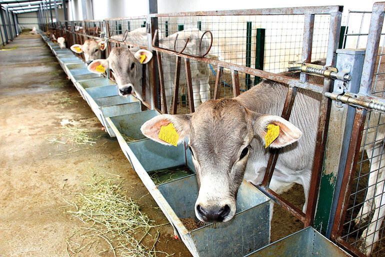Et ucuzlar ama besiciyi küstürmeyin