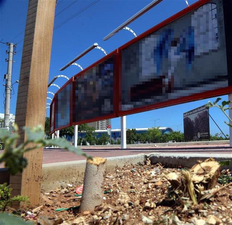 Mersin'de ağaç katliamı kamerada