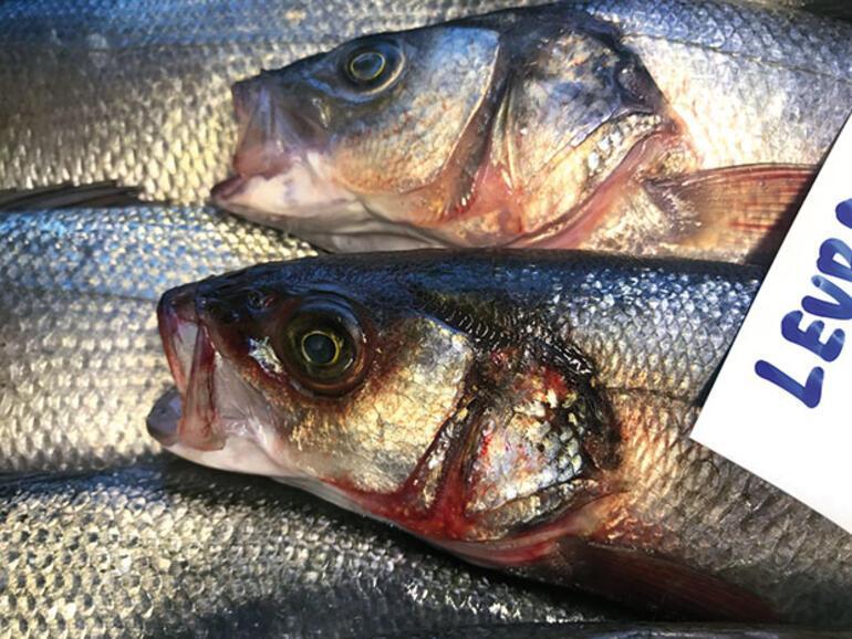 Çiftlik balığı ne kadar güvenli