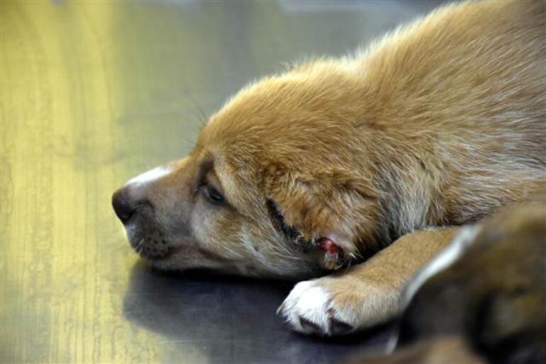 Marmaris'te üç yavru köpeğe işkence yapan asker gözaltına alındı