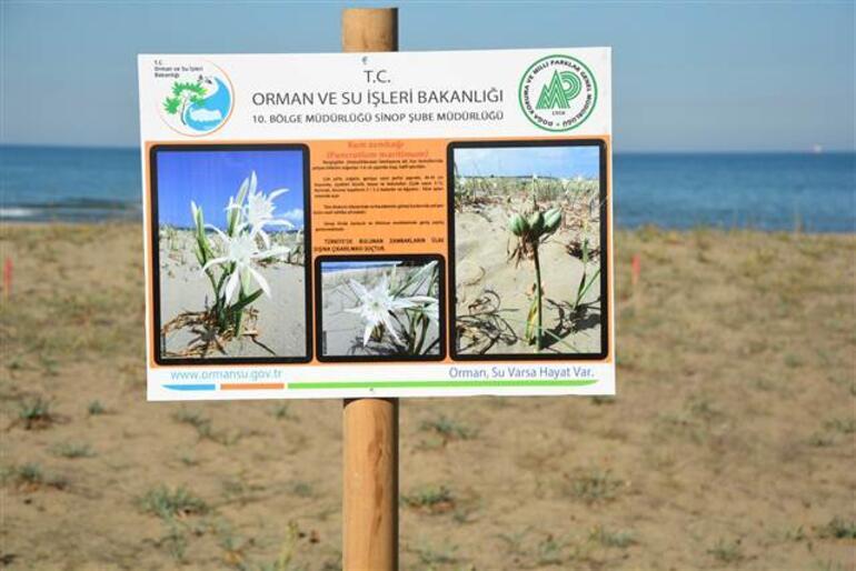 Bu bitkiyi koparmanın cezası 38 bin lira