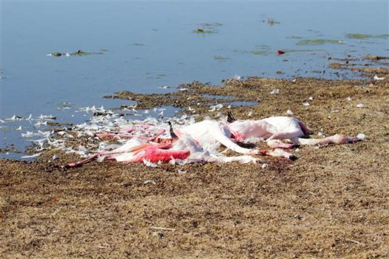 Yer: Konya... Flamingo katliamı