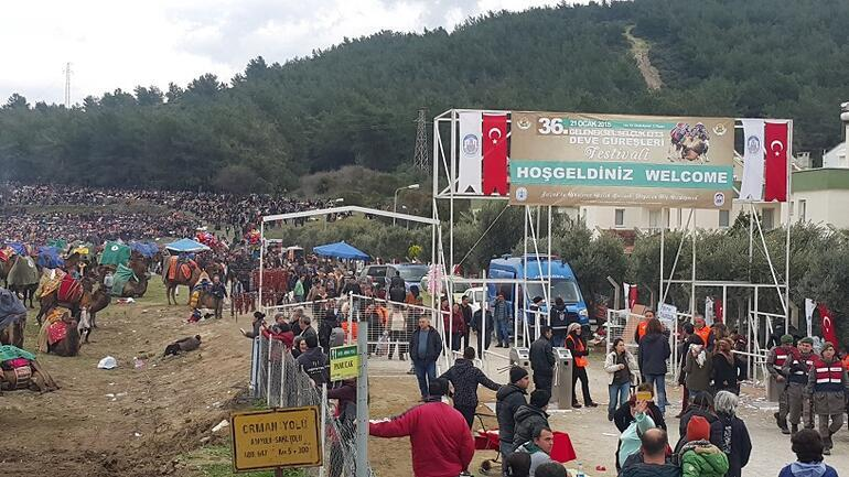 Rekorlar kitabında bir festival: Deve Güreşleri Festivali