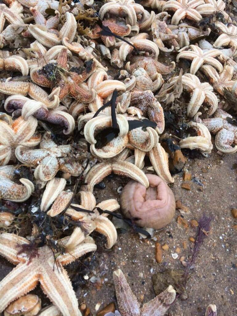 Kıyamet manzarası... Sahile on binlerce deniz canlısı vurdu