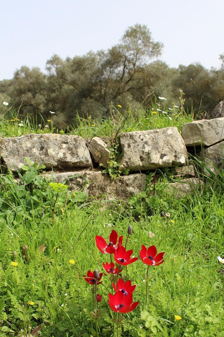 Karia Yolu'nda çiçekler arasında: Uyku Vadisi