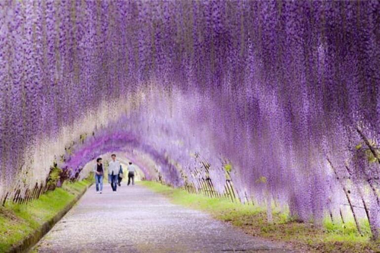 Doğanın mucizeleri: Ağaç tüneller