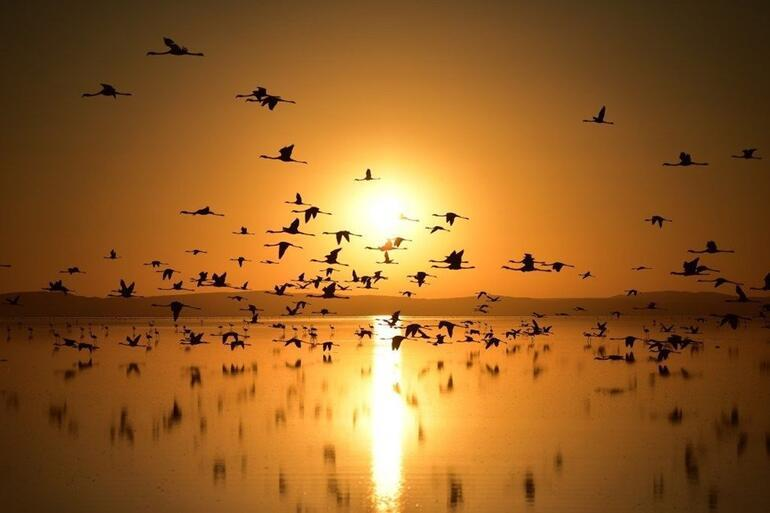 Türkiyenin Flamingo cennetine turist akını