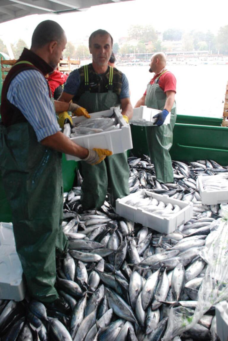 Ton Balığı Hangi Balıktan Yapılır