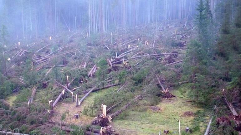 İtalya'da fırtına: 20 kişi öldü, 14 milyon ağaç devrildi