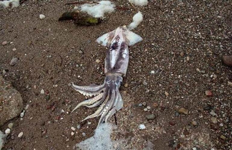 Yer: Antalya... Kıyıya vurdular