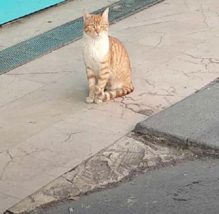 İşte sosyal medyanın konuştuğu kedi