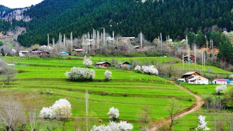 Artvinin sakin şehri Şavşatta ilkbahar bir başka güzel