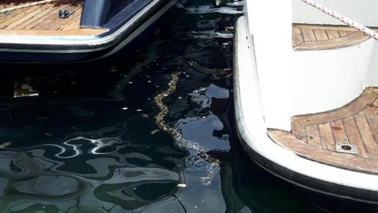 Datçada şaşırtan şeffaf deniz canlısı