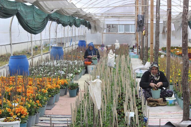 Bursanın dağ köylerinde yetişiyor 15 ülkeye ihraç ediliyor