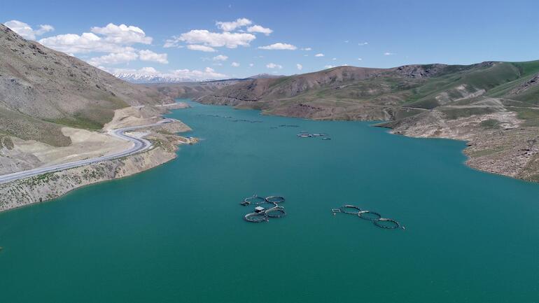 Vanda üretiliyor 5 kente gönderiliyor