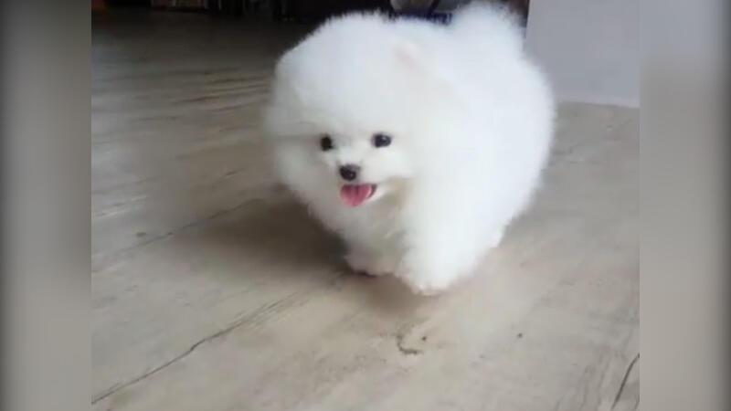 Dünyanın en tatlı köpeği!