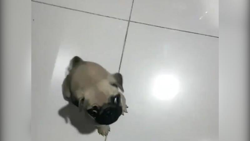Yavru köpeğin güldüren mama telaşı!