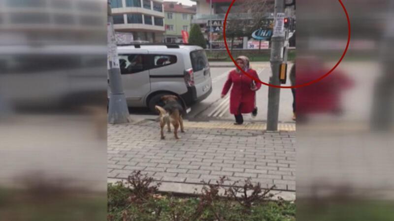 Sokak köpeğinden insanlığa trafik dersi