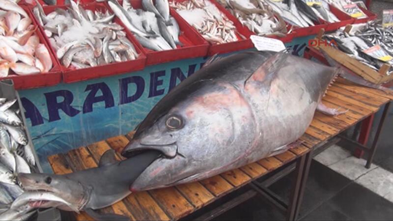 Şanlıurfa'da 122 kiloluk balık görenleri şaşırttı