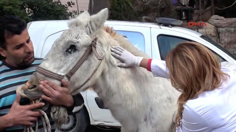 Kuyruğunu kesip, kırbaçla kör ettikleri atı sokağa attılar