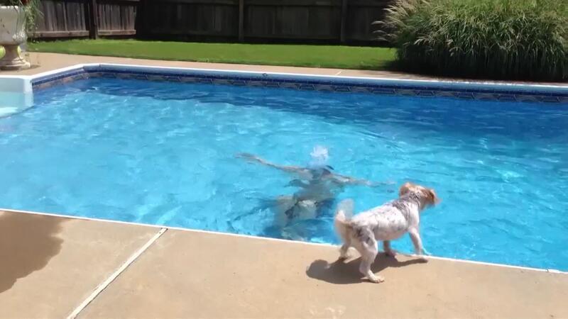 Sahibinin boğulduğunu zanneden köpek