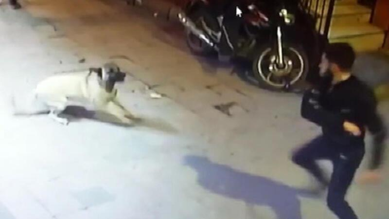 Outrage over attack on Syrian refugee child's dogs in Istanbul