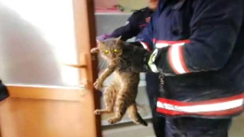 Kitten rescued after getting stuck in a wall following meticulous efforts in Turkey