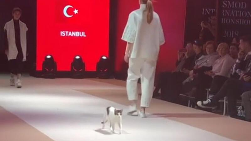 Turkish cat shows what catwalk means