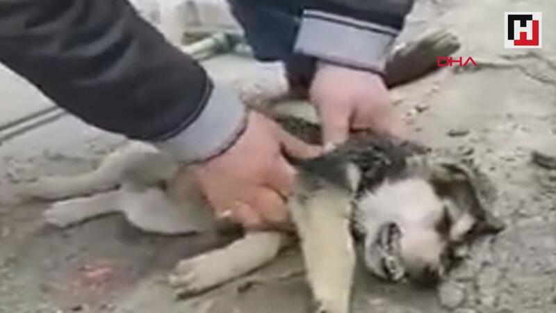 Passerby saving choking puppy in Turkey hailed as hero on social media