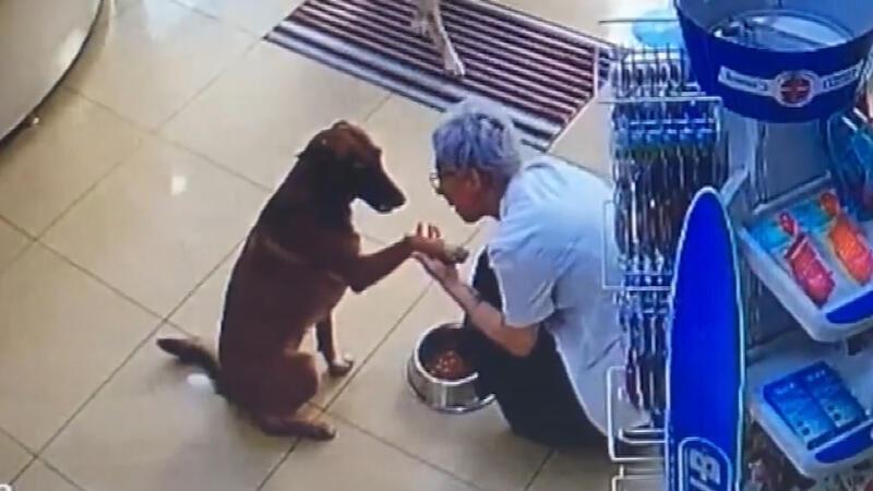 Patisinden yaralanan köpek eczacıdan böyle yardım istedi ile ilgili görsel sonucu