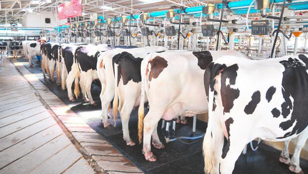Resume For Dairy Farmer
