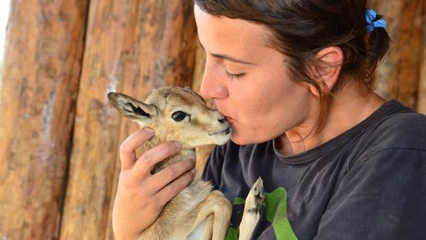 3 5 liraya Afrika safari nasıl yapılır