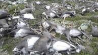 Yıldırım çarpması sonucu yüzlerce hayvan telef oldu!