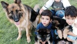Çocuklara hayvan sevgisi aşılandı