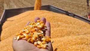 Mersin'de 400 ton GDO'lu mısır unu ele geçirildi