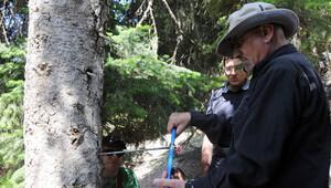 Kuraklığı ağaç halkalarında incelediler