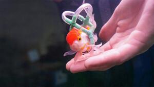 Balığı için tekerlekli sandalye yaptı