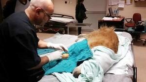 Hastane acil servisinde köpek ameliyatına inceleme
