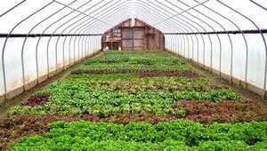 Türkiye'de örtü altı tarım alanı artıyor