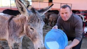 Türkiye'nin dört yanına eşek sütü satıyor