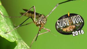 Zika Virüsü nedir? Survivor 2016 iptal mi edilecek?
