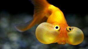 Balıklar nefessiz kalır mı?