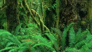 Yağmur ormanlarını diğer ormanlardan ayıran şey nedir?